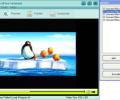 AnvSoft Web FLV Player Freeware Скриншот 0